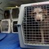 Информация для владельцев животных, планирующих поездку со своим питомцем