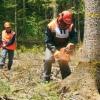 О продаже древесины, полученной при проведении регламентных работ по вырубке лесных насаждений