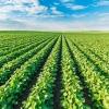 Предложение обучения по сельскохозяйственным направлениям