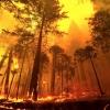 Пожароопасный период на территории лесного фонда Тверской области