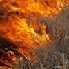 Главное управление МЧС России по Тверской области напоминает гражданам, что поджог сухой травы – серьезное правонарушение
