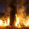 Не разводите огонь в сухой траве!