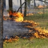 Что делать, если вы оказались в зоне лесного (торфяного) пожара?