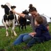 Объявление о проведении конкурса по отбору семейных животноводческих ферм