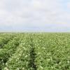 О проведении работ по химической обработке сельскохозяйственных культур