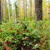 Правила безопасности в лесу
