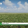 «Тверь Агропром» расширяет ассортимент культур, вводит новые земли в оборот и готовится к уборке урожая
