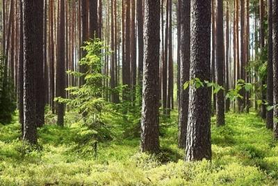 О лесопользователях, осуществляющих заготовку и поставку дровяного долготья по территории Тверской области