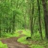 Напоминаем основные правила, которые необходимо соблюдать в лесу