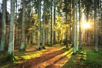 Если вы вошли в лес — главное не заблудиться!
