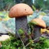 Младшим школьникам Лихославля расскажут о внешнем виде, условиях роста и значении грибов в природе