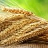 14 октября – День работников агропромышленного комплекса
