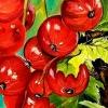 Открытие выставки картин Елены Меньшиковой «Как прекрасен этот мир»