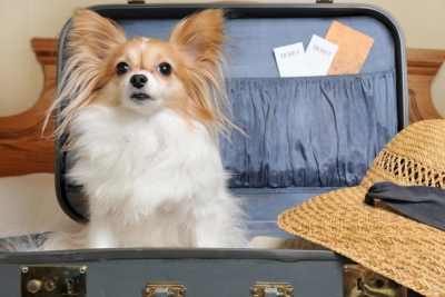 Ветеринарные правила организации работы по оформлению ветеринарных сопроводительных документов