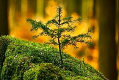 16 сентября – День работников леса и лесоперерабатывающей промышленности