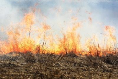 О ситуации с поджогом сухой травы в районе кладбища в городе Лихославле