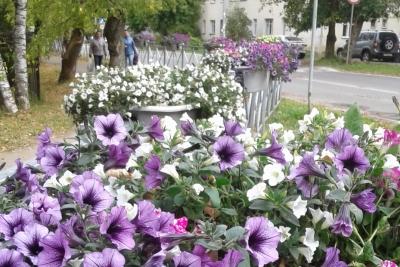 Цветы – в добрые руки!
