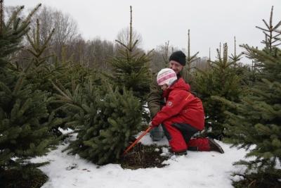 Как легально срубить новогоднюю елку