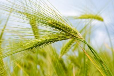 Начался конкурсный отбор на предоставление грантовой поддержки начинающих фермеров, семейных ферм, кооперативов