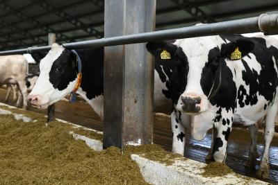 Сельхозпроизводители Тверской области получат поддержку на развитие молочного скотоводства