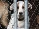 Тверской области внедряется новая система обращения с безнадзорными животными